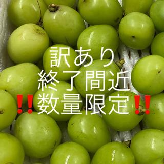 訳あり 長野県産 シャインマスカット 1.5キロ 粒(フルーツ)
