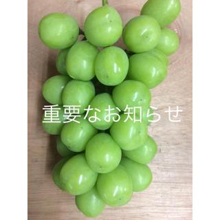 長野県産 シャインマスカット 粒(フルーツ)