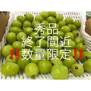 秀品 長野県産 シャインマスカット 800g 粒(フルーツ)