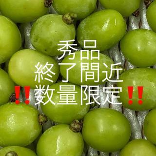 秀品 長野県産 シャインマスカット 1.5キロ 粒(フルーツ)