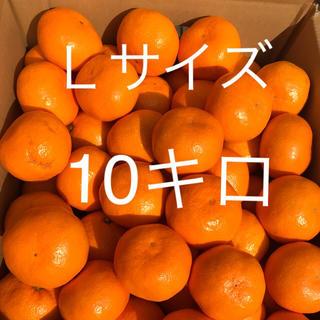 淡路島からみかん(L)(フルーツ)