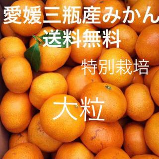 愛媛三瓶産みかん 大粒  10キロ(フルーツ)