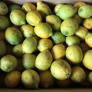 国産無農薬レモン約14.5キロ(105個)(フルーツ)