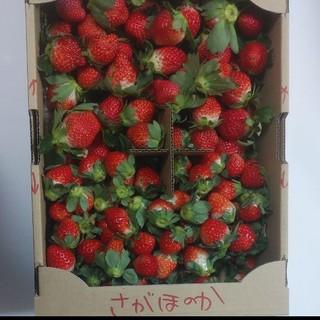 今日発送1名様❤虫食われバラ詰❤さがほのか+ゆうべに1,7キロ送料込3000円(フルーツ)