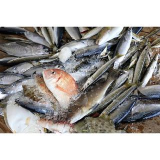 らっふらん様専用 対馬の雑魚三昧干物セット(4kg)(魚介)