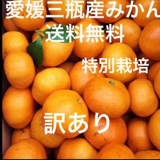 愛媛三瓶産みかん 訳あり 5キロ(フルーツ)