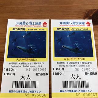 美ら海水族館チケット 大人 2枚(水族館)