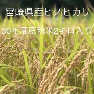 30年度産ひのひかり(米/穀物)