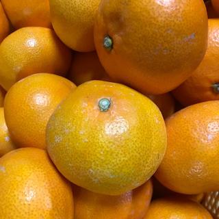 和歌山県有田産 マルチ大玉みかん5kg (フルーツ)