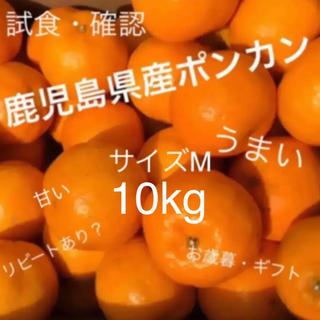 Mサイズ10kg(フルーツ)