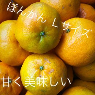 ぽんかんLサイズ(フルーツ)