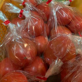 限定10箱大玉トマト1.4kg(野菜)