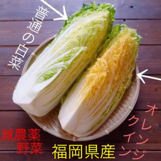 3時間タイムセール♡減農薬オレンジクイン➕減農薬ロメインレタス➕無農薬野菜セット(野菜)