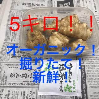 無農薬 オーガニック菊芋 掘りたて 新鮮!5キロ 4300円!(野菜)