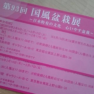 第93回 国風盆栽展 日本特有の文化 心いやす盆栽 ペア チケット 2枚セット