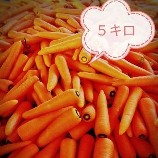 【無農薬・無肥料40年】究め人参5kg-訳あり(野菜)