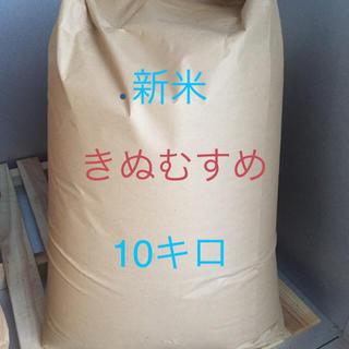 新米  きぬむすめ(米/穀物)