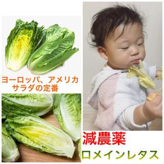 開店セール♡残りわずか♡無農薬野菜➕子供も大好きマヨネーズCM人気ロメインレタス(野菜)