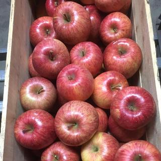 北国青森より〜蜜入り自慢!青森県産りんご 葉とらずふじ 5キロ(フルーツ)
