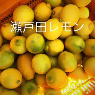 瀬戸田産レモン(フルーツ)