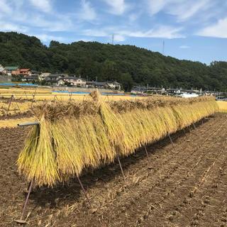 長野県産コシヒカリ玄米5kg(米/穀物)