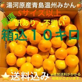 訳あり★産直不揃い10kg★神奈川県湯河原産🍊晩生 青島温州みかん🍊⑦(フルーツ)