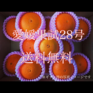 愛媛果試28号 3キロ(フルーツ)