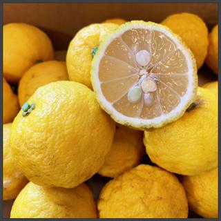 無農薬🍊ゆず 1kg【宅急便コンパクト】小粒 ゆず湯におすすめ(フルーツ)