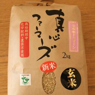 兵庫県直送 無農薬の真心米 ミルキークイーン/ 玄米 / 10kg/ R1年産(米/穀物)