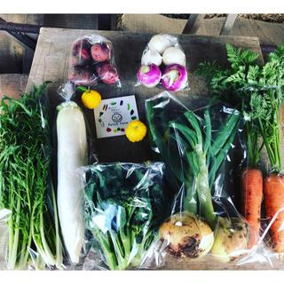 【選べる野菜セット】渥美半島から直送!旬彩野菜バスケット(野菜)