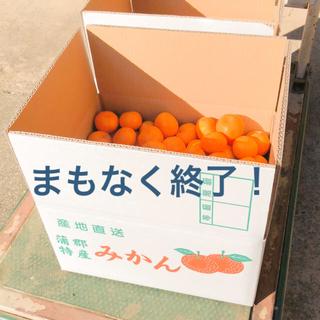 蒲郡早生みかん 規格外10キロ (小玉)