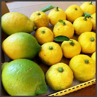 無農薬 柑橘系セット🍋1kg【宅急便コンパクト】ゆず レモン(フルーツ)