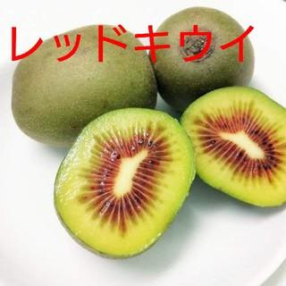 遠足は中戸様専用 キウイフルーツ【レッドキウイ】約2キロ(フルーツ)