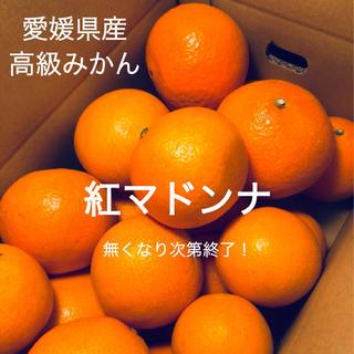 ご家庭用 高級みかん【紅マドンナ】S〜3L玉 2kg