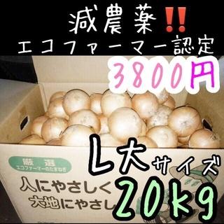 北海道産 減農薬 玉ねぎ L大サイズ 20キロ