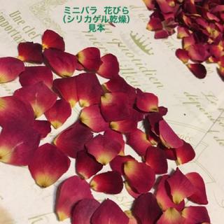 ミニバラ 花びら(シリカゲル乾燥)ドライフラワー★花弁★ミニ薔薇★ミニローズ  (各種パーツ)