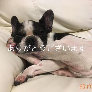 Solaさま専用(犬)