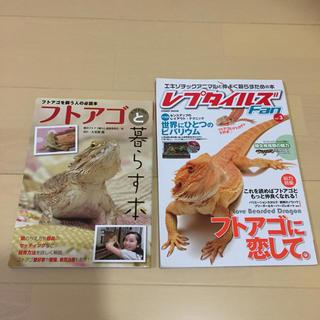 フトアゴヒゲトカゲ 飼育本  (爬虫類/両生類用品)