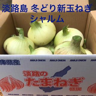 美味しい(๑˃̵ᴗ˂̵) 淡路島 冬どり 新玉ねぎ シャルム 3kg