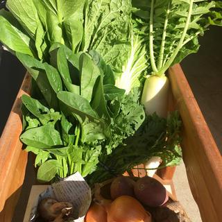 淡路島【きまぐれ】100 野菜set