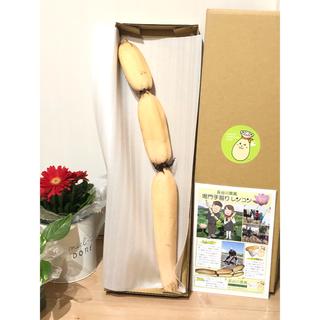 無農薬  エコファーマー🌱 長谷川農園  鳴門 手彫り 蓮根