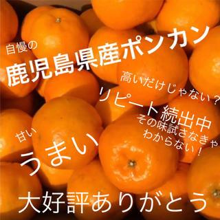 ポンカン LL   10kg(フルーツ)