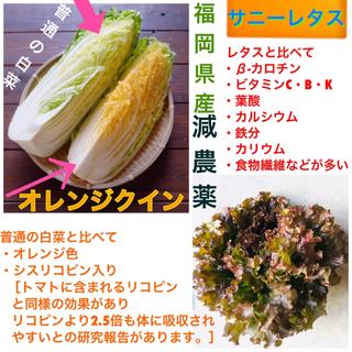 早い者勝ち★白菜より栄養満点オレンジクイン➕美肌に必要な葉酸が多いサニーレタス(野菜)
