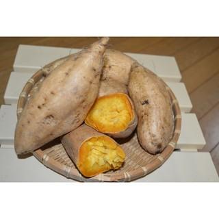 鹿児島県産 マロンゴールドさつまいも 10kg(野菜)
