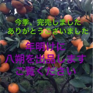 みかん ★減農薬&有機肥料★皮も安心  予約用※専用を作ります(フルーツ)