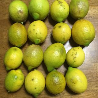 無農薬レモン 16個 3キロ(フルーツ)