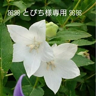 【とぴち様専用】☆薔薇のスワッグ セット~White Winter ver.~(ドライフラワー)