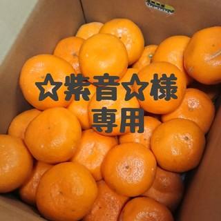 ☆紫音☆様 専用  大玉‼️完熟早生みかん(フルーツ)