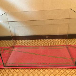 テトラ(Tetra)のTetra  ガラス製 水槽(アクアリウム)
