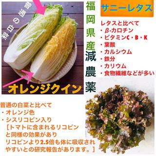 限定セット★福岡県しか手に入らない新米1キロ➕減農薬オレンジクイン➕サニーレタス(米/穀物)